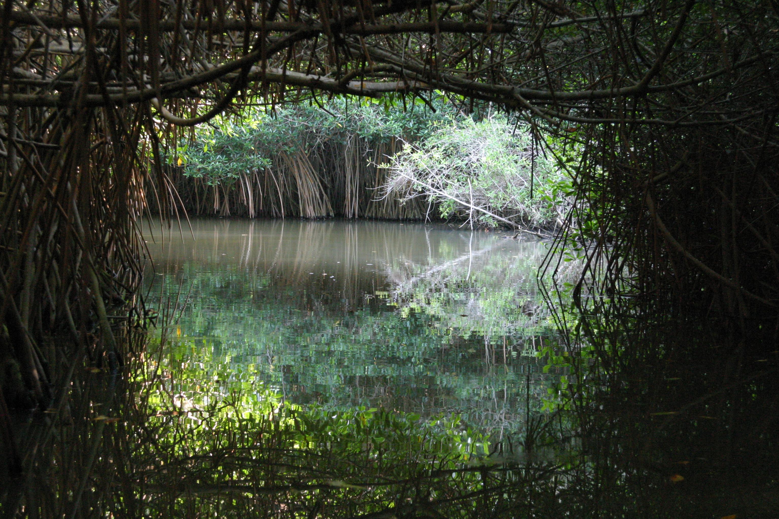 ambiental1