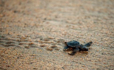 Turtle 1808-2